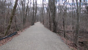 A View of the Center Trail